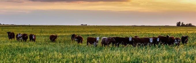 Whey från gräsbetande kor vs vanligt whey